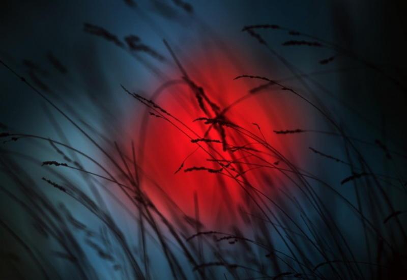 """Удивительный мир макросъёмки: Снимки, так похожие на сюрреалистические картины <span class=""""color_red"""">- ФОТО</span>"""