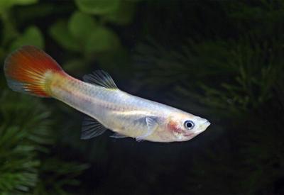 Американца посадили за убийство домашней рыбки