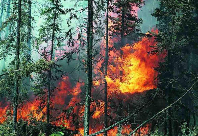 В Португалии из-за пожаров эвакуированы несколько тысяч человек