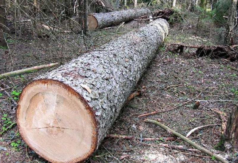 В Азербайджане мужчину оштрафовали за вырубленное дерево