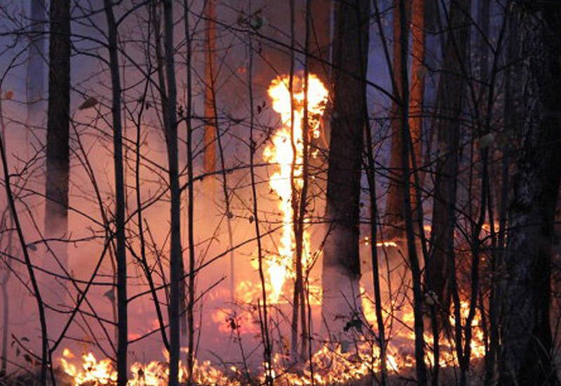 Gürcüstanda meşə yanğını - 150 yanğınsöndürən cəlb olundu