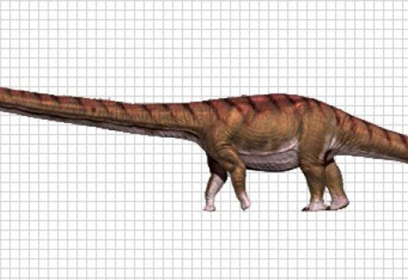 Стало известно, сколько весил самый крупный зверь на Земле