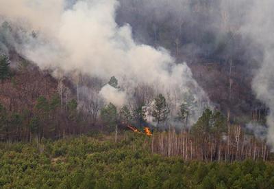 В Армении начался мощный лесной пожар, огонь приближается к селу