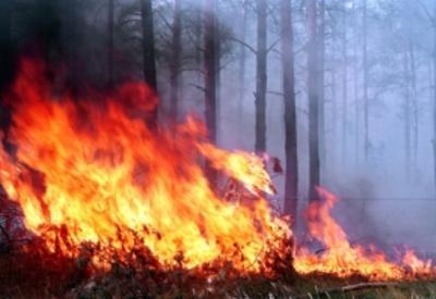 В Барде на кладбище произошел пожар