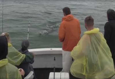 """Огромная акула выпрыгнула из воды и ограбила туристов <span class=""""color_red"""">- ВИДЕО</span>"""