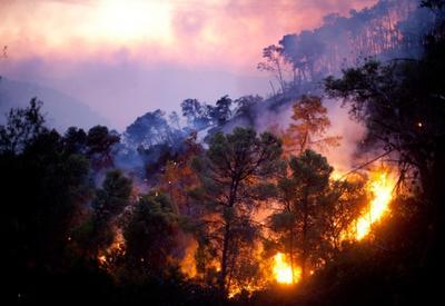 В Армении вспыхнул новый лесной пожар