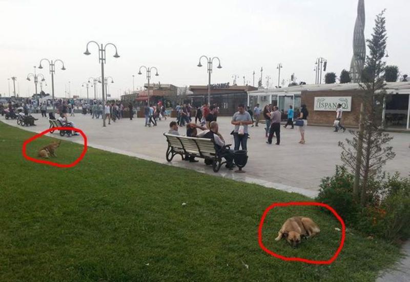 """Bakının mərkəzi parklarında gəzən təhlükə <span class=""""color_red"""">- FOTOLAR</span>"""