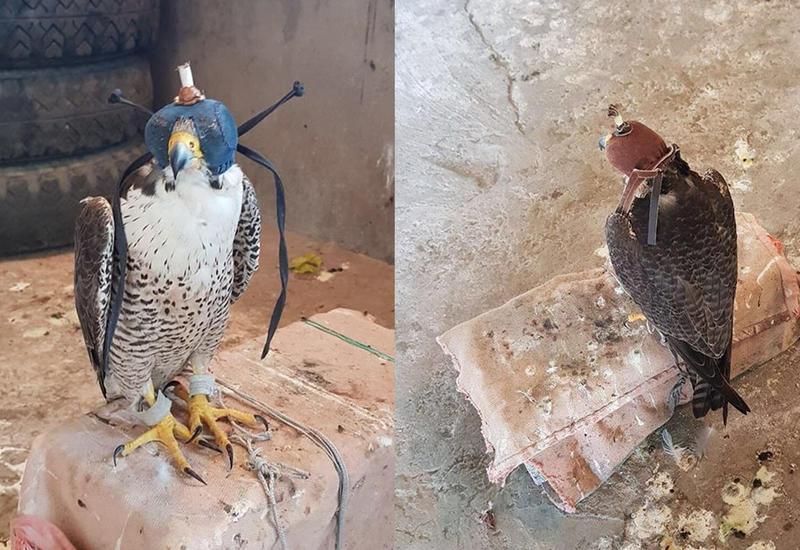 """Житель Баку оштрафован за незаконное содержание редких птиц <span class=""""color_red"""">- ФОТО</span>"""