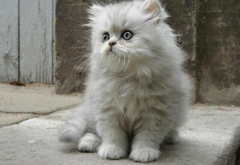 """14 забавных котиков, которые попали в интернет и стали знамениты <span class=""""color_red"""">- ФОТО</span>"""
