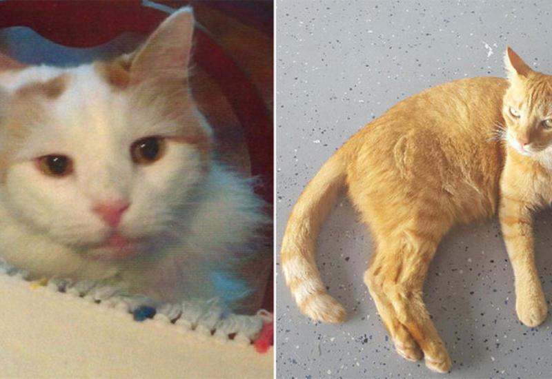 Вдова из Нью-Йорка оставила котам наследство в 300 тысяч долларов