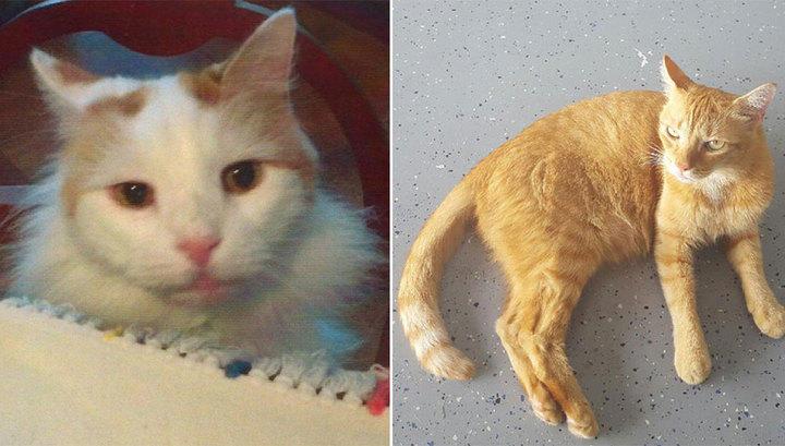 Вдова изНью-Йорка оставила котам наследство в 300 000  долларов