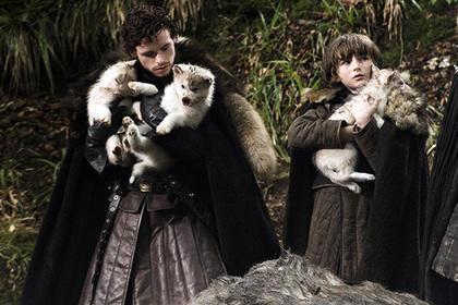 Фанаты «Игры престолов» заводят собак породы хаски, а после этого избавляются отних