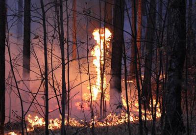 В Грузии вновь бушуют лесные пожары