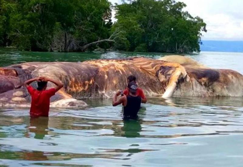 10 самых странных созданий, найденных в воде