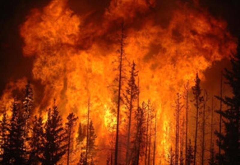 В Габале вспыхнул крупный пожар
