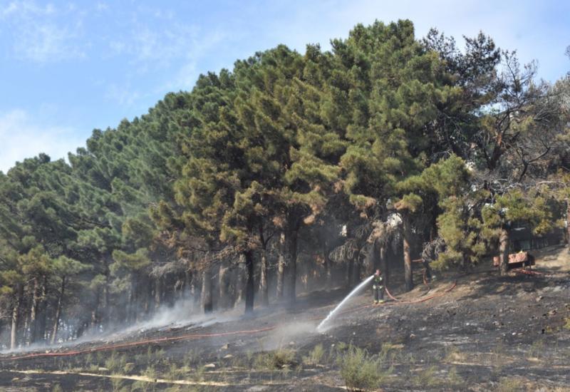 Минэкологии о крупном пожаре в Габале
