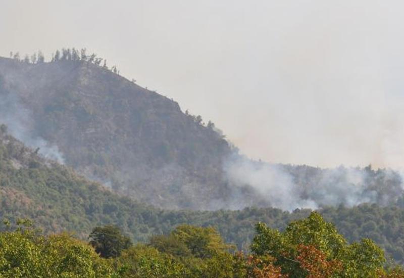 Пожароопасная ситуация в лесах Габалы полностью взята под контроль
