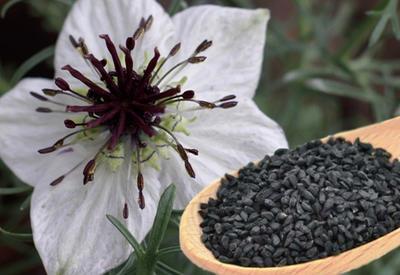 Король всех растений — лечит все болезни, кроме смерти! И это научно доказано!