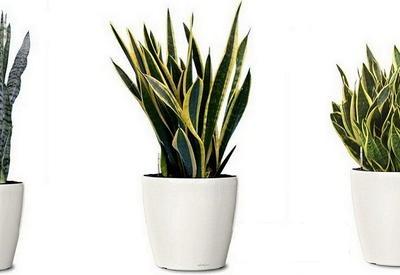 Какие комнатные растения нужны в доме, где курят
