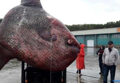 "Рыбаки поймали чудовищную рыбу весом в 1 тонну <span class=""color_red"">- ФОТО</span>"
