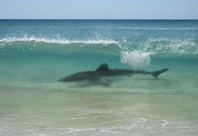 """Купаться запрещено: самые опасные пляжи мира <span class=""""color_red"""">- ФОТО</span>"""