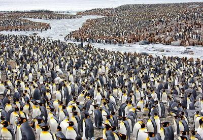 Фотограф делится своими лучшими снимками пингвинов за последние десять лет