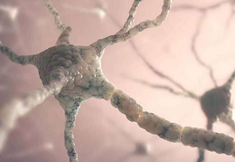 Ученые из США вылечили рассеянный склероз с помощью генной терапии