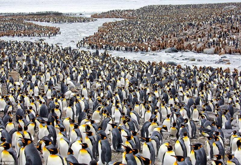 """Фотограф делится своими лучшими снимками пингвинов за последние десять лет <span class=""""color_red"""">- ФОТО</span>"""