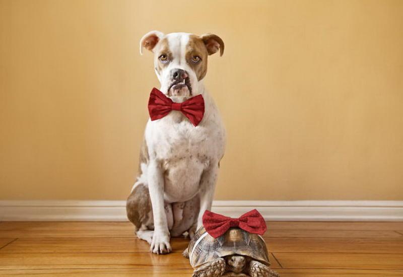 """Такие разные, но такие близкие: удивительная дружба собаки и черепахи <span class=""""color_red"""">- ФОТО</span>"""