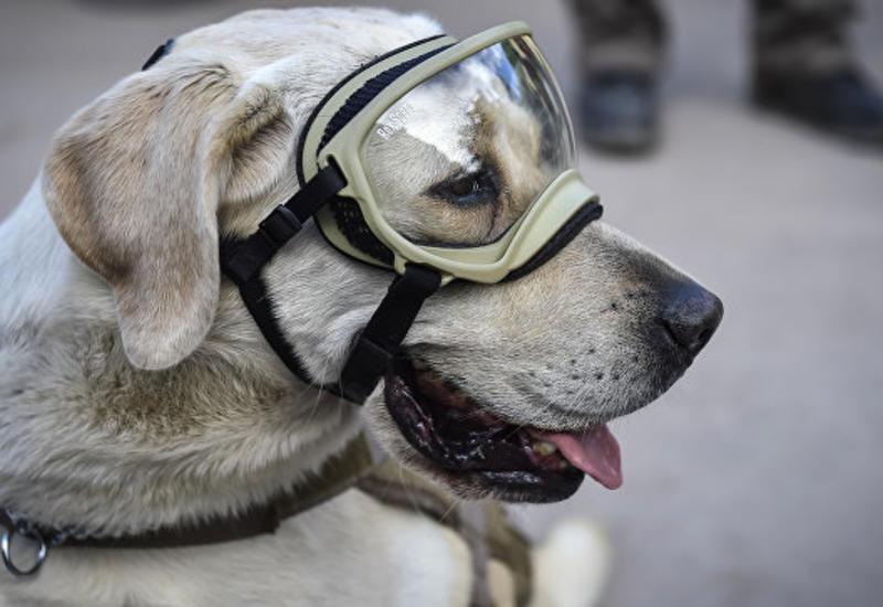 """Мексиканцы просят разместить образ собаки-спасателя на банкноте <span class=""""color_red"""">- ВИДЕО</span>"""