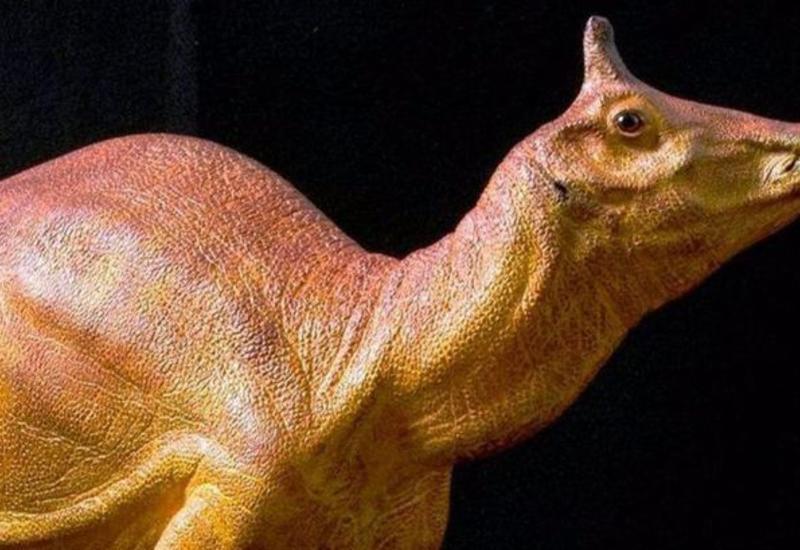 Уникальный динозавр стал официальным символом Калифорнии