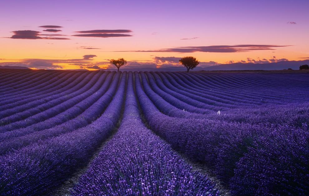 Изумительные снимки лавандовых полей во Франции