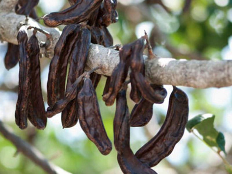 Ayaqlar altında SƏRVƏT - Keçibuynuzu bitkisinin 10 FAYDASI