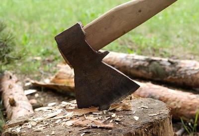 Gəncə sakini 3 tut ağaçı kəsdi - Dəyəri 1500 manat