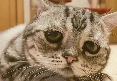 """Луху: самая грустная кошка на свете, чьи фотографии разобьют ваше сердце <span class=""""color_red"""">- ФОТО</span>"""