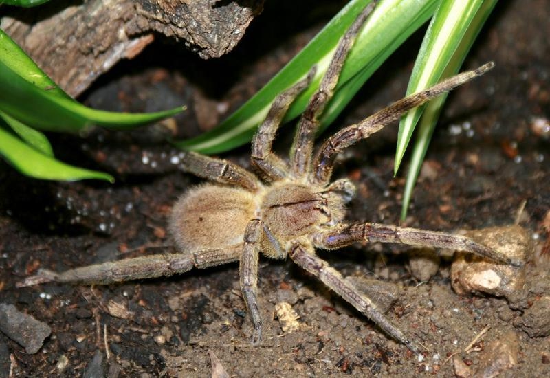 """Нападение паука на лягушку вызвало истерику у жителя США <span class=""""color_red"""">- ВИДЕО</span>"""