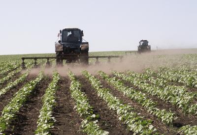 ВБ прогнозирует значительный рост агросектора Азербайджана