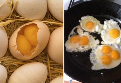 Почему в яйце бывает два желтка
