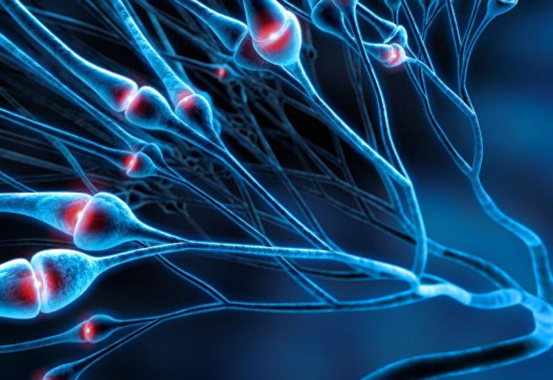 Ученые: Болезнь Альцгеймера может быть заразной