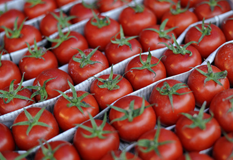 Россия может разрешить поставки помидоров с нескольких предприятий Азербайджана