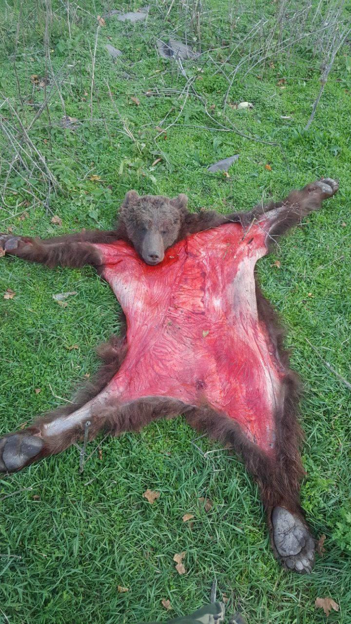 В Губе задержаны охотники на медведя