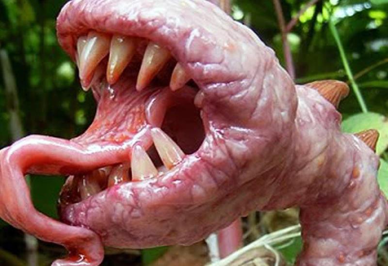 8 страшно ядовитых растений, о которых необходимо знать