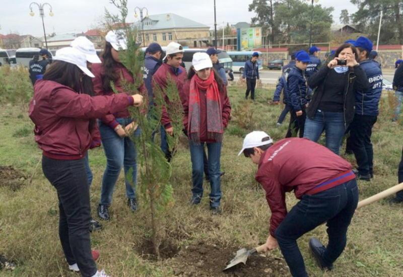 """Школьники приняли участие в акции по озеленению, проводимой по инициативе IDEA <span class=""""color_red"""">- ФОТО</span>"""