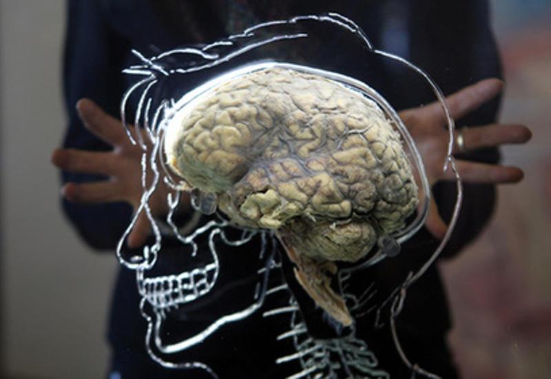 Раскрыта причина старения мозга