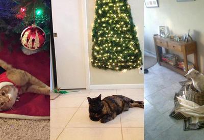 30 надежных способов спасти новогоднюю елку от хвостатых хулиганов.