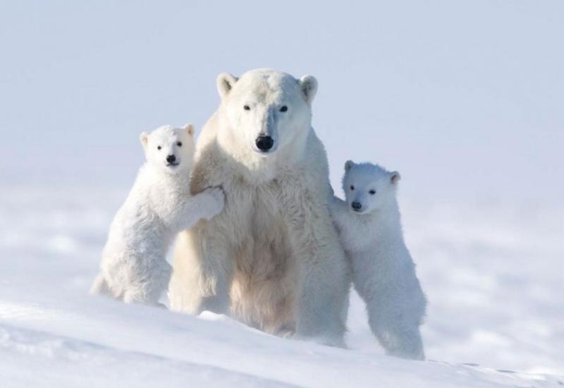 """Ради этих кадров фотограф провел 117 часов на лютом морозе <span class=""""color_red"""">- ФОТО</span>"""