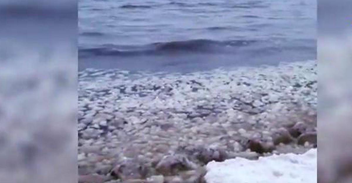 Ледяные шарики наполнили побережье Финского залива: свидетели публикуют кадры чуда природы
