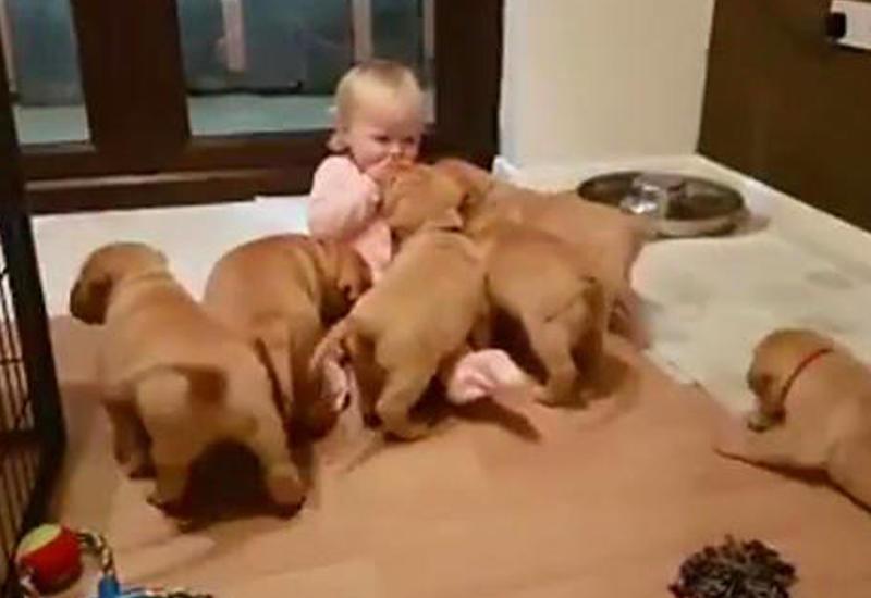 """Видео с щенками, облепившими маленькую девочку, взорвало Сеть <span class=""""color_red"""">- ВИДЕО</span>"""