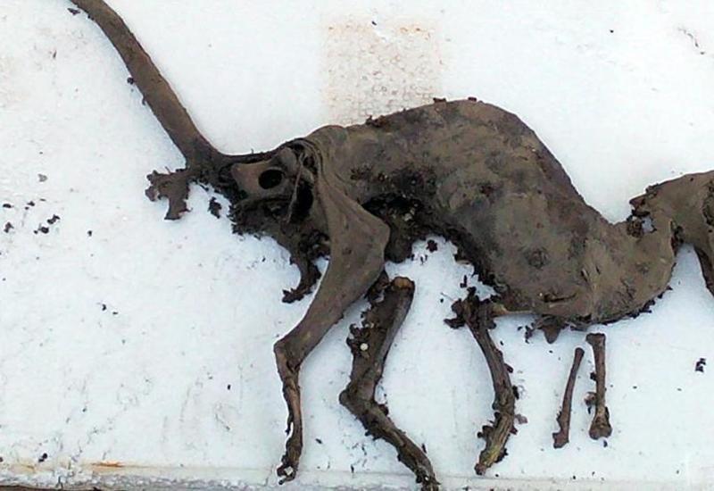 """Скелет похожего на динозавра существа озадачил ученых <span class=""""color_red"""">- ВИДЕО</span>"""