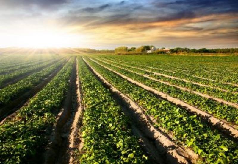 Азербайджан увеличит орошаемую посевную площадь